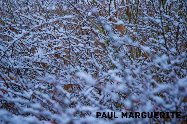 Guyancourt sous la neige 20101217 022