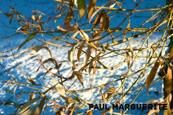 Guyancourt sous la neige 20101217 024