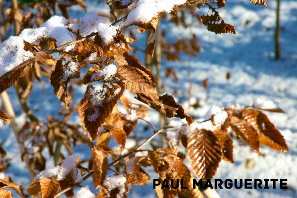 Guyancourt sous la neige 20101217 026