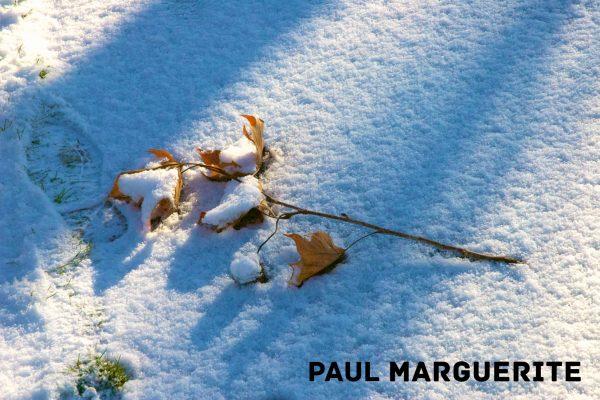 Guyancourt sous la neige 20101217 027