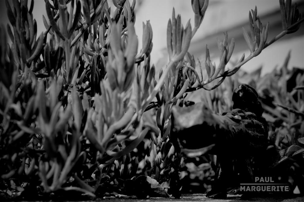 Lampaul-Plouarzel domestique par Paul Marguerite 6