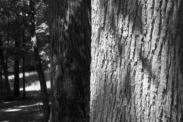 Bois de Guyancourt - par Paul Marguerite -1