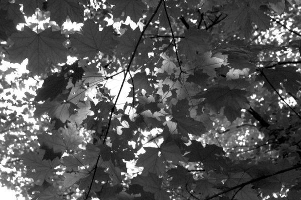 Bois de Guyancourt - par Paul Marguerite -11