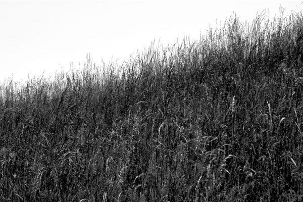 Bois de Guyancourt - par Paul Marguerite -12
