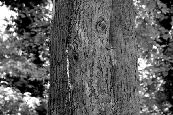 Bois de Guyancourt - par Paul Marguerite -2