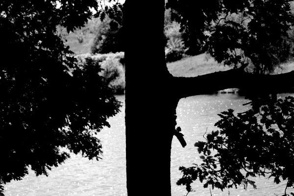 Bois de Guyancourt - par Paul Marguerite -3