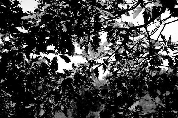 Bois de Guyancourt - par Paul Marguerite -4