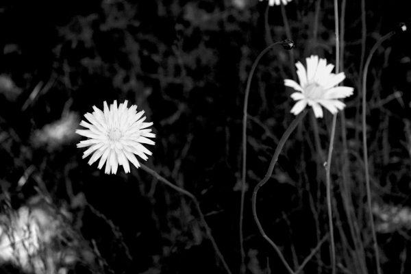 Bois de Guyancourt - par Paul Marguerite -5