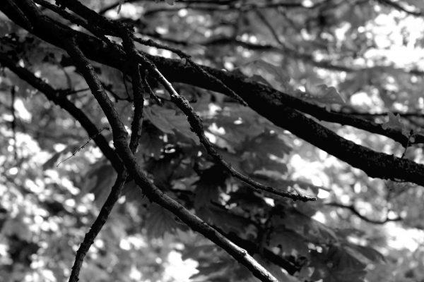 Bois de Guyancourt - par Paul Marguerite -6