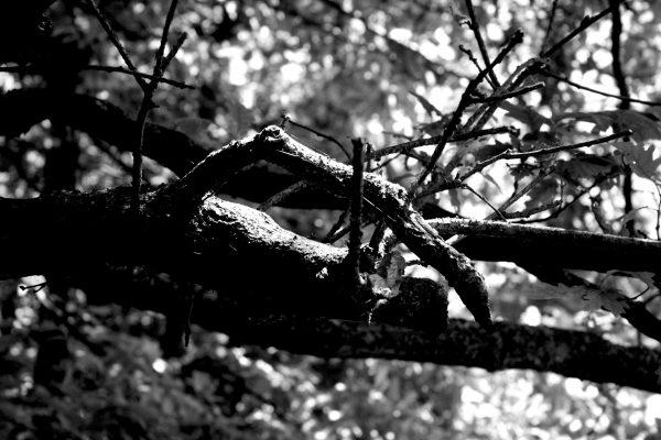 Bois de Guyancourt - par Paul Marguerite -7