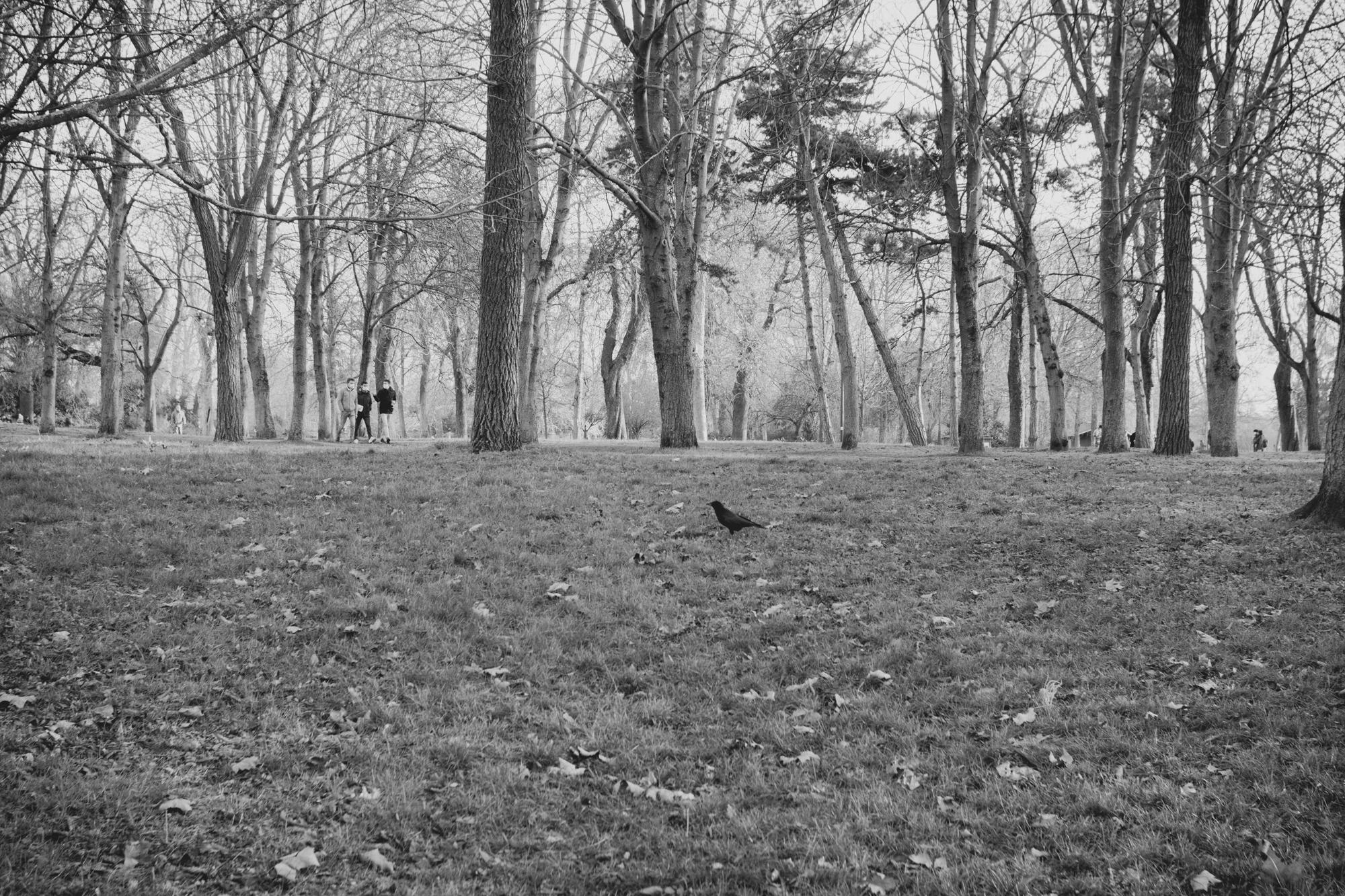 Des arbres présents